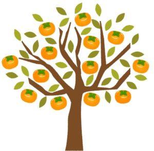 柿の木剪定2018⒒